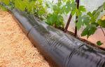 Как выращивать баклажаны в открытом грунте: выбор сорта, подготовительные работы, посадка и уход, фото, видео – выращиваем в теплице