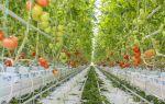 Томаты на гидропонике: выращивание в домашних условиях, особенности, фото, видео – выращиваем в теплице