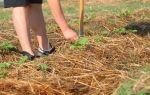 Пустоцвет на огурцах в теплице: почему образуется много, что делать для уменьшения количества, фото, видео – выращиваем в теплице