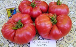 Томат медвежья лапа (50 фото): описание сорта помидор, отзывы, видео – выращиваем в теплице