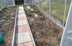 Закручиваются верхние листья помидор: если скручиваются у рассады томатов, почему макушки, если верхушки, описание, видео – выращиваем в теплице