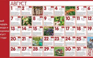 Лунный календарь садовода и огородника на август 2018: таблица, приметы, фазы луны – выращиваем в теплице