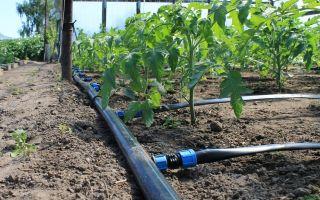 Системы полива для дачи: автоматические для огорода, из пластиковых труб, устройства и приспособления, фото, видео – выращиваем в теплице