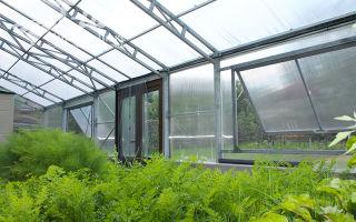 Солнечный вегетарий: достоинства теплицы нового поколения, фото, видео – выращиваем в теплице