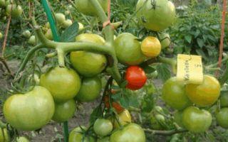 Томат большая мамочка (50 фото): описание помидор, отзывы, видео – выращиваем в теплице