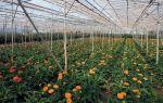 Результат поиска – выращиваем в теплице