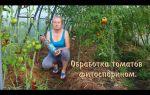 Фитоспорин: отзывы для томатов, инструкция по применению, как и когда обрабатывать рассаду, фото, видео – выращиваем в теплице
