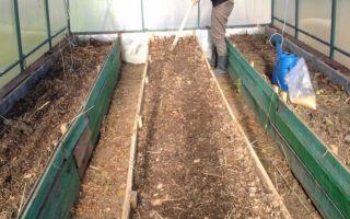 Сидераты в теплице: посадка осенью, весной, виды, фото, видео – выращиваем в теплице