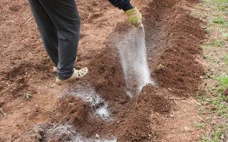 Дозатор удобрений: как использовать для оздоровления почвы, способы внесения, фото, видео – выращиваем в теплице
