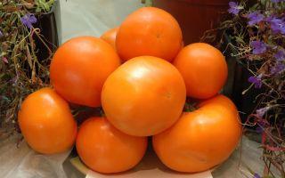 Помидоры желтые и красные: польза и вред, почему и какие лучше, описание хороших сортов, фото, видео – выращиваем в теплице
