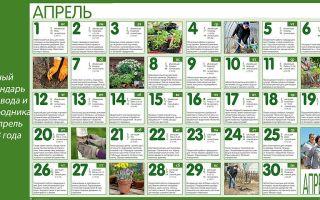 Лунный посевной календарь на апрель 2018 года для огородников и садоводов: народные приметы, благоприятные дни для посева и ухода – выращиваем в теплице