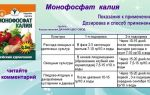 Монофосфат калия: применение для томатов, дозировка подкормки, фото, видео – выращиваем в теплице