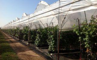 Мульчирование томатов в теплице: как и чем мульчировать помидоры, фото, видео – выращиваем в теплице