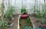 Полив помидоров бутылками: через пластиковые емкости, как сажать рассаду с применением системы, фото, видео – выращиваем в теплице