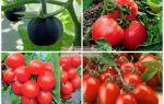 Лучшие сорта томатов для сибири: для теплицы, семена для открытого грунта, фото томатов – выращиваем в теплице