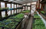 Советы огородникам – выращиваем в теплице