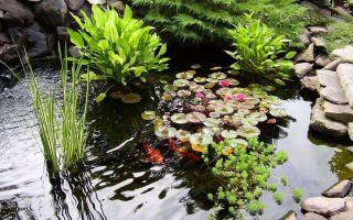 Какие растения для пруда на даче наиболее подходят – выращиваем в теплице
