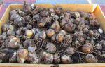 Как хранить луковицы гиацинтов в домашних условиях: зимой до весны, после цветения, фото, видео – выращиваем в теплице