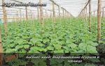 Бизнес-план «выращивание огурцов в теплице»: затраты, рентабельность, фото, видео – выращиваем в теплице