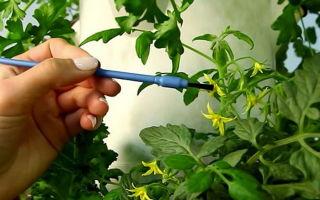 Семена самоопыляемых помидоров для теплицы: описание сортов, критерии выбора, как опылять томаты в парнике, фото, видео – выращиваем в теплице