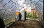 Урожай клубники: как увеличить, получить, вырастить, секреты, фото, видео – выращиваем в теплице
