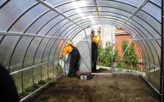 Подготовка почвы в теплице под помидоры весной: обработка грунта, как сделать грядку, высадка рассады, фото, видео – выращиваем в теплице