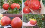 Томат ракета: характеристика и описание сорта, фото, отзывы, выращивание из семян, видео – выращиваем в теплице