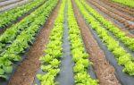 Рассада помидоров: выращивание, посадка в теплицу, схема, сроки и правила высадки, фото, видео – выращиваем в теплице