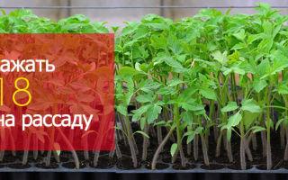 Посадка помидоров в феврале: посев на рассаду по лунному календарю, когда и как правильно сажать в 2017 году, фото, видео – выращиваем в теплице