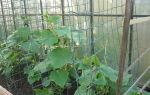 Шпалерная сетка для огурцов в теплице: достоинства, применение для выращивания, правила формирования куста, фото, видео – выращиваем в теплице