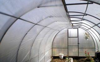 Почва для посадки помидоров: какую землю любят томаты, состав грунта, кислотность, посадка семян, фото, видео – выращиваем в теплице