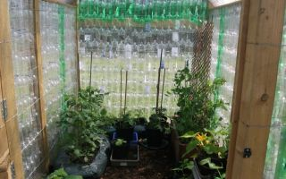 Теплица из пластиковых бутылок: как сделать своими руками, фото парника из стеклянных, видео – выращиваем в теплице