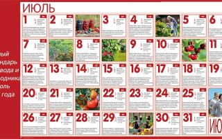 Лунный календарь садовода и огородника на июль 2018 года – таблица, народные приметы, сезонные работы – выращиваем в теплице