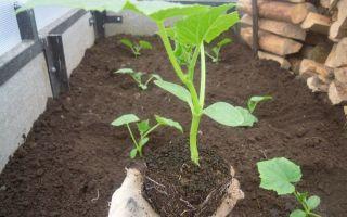 Мульчирование помидор в теплице: как и чем замульчировать томаты, описание, видео – выращиваем в теплице