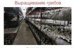 Грибы – выращиваем в теплице