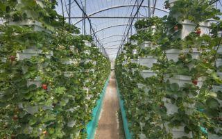 Теплицы для выращивания клубники круглый год: покупные, изготовленные своими руками, фото, видео – выращиваем в теплице
