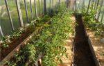 Грядки по митлайдеру: особенности, преимущества, фото, видео – выращиваем в теплице