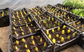 Индукционные светильники и лампы для растений в теплице – выращиваем в теплице