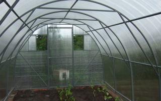 Черенкование георгин весной: технология размножения, фото, видео – выращиваем в теплице