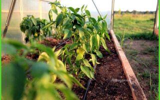 Удобрения – выращиваем в теплице