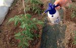 Обработка помидоров борной кислотой: томатов, опрыскайте, поливать, удобрениями, подкормка, растений – выращиваем в теплице