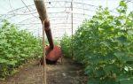 Отопление теплицы дровами: виды печек, характеристика, правила, эффективность, фото, видео – выращиваем в теплице
