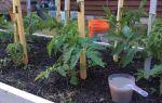 Как формировать кусты помидоров в теплице: пасынкование, обрезка, прищипывание, фото, видео, схемы – выращиваем в теплице