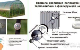 Крепление поликарбоната: как крепить саморезами, термошайбами, способы крепежа, фото, видео – выращиваем в теплице
