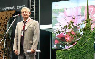 Томат интуиция: отзывы, характеристика и описание сорта, фото помидоров, урожайность, видео – выращиваем в теплице