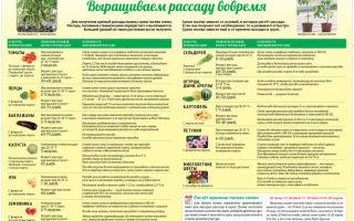 Сорта ранних помидоров для теплиц: ультраранние, суперранние, скороспелые, названия, описание, фото, видео – выращиваем в теплице