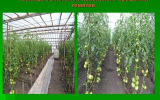 Полив помидоров в теплице: как часто, сколько раз и как правильно, режим, норма, фото, видео – выращиваем в теплице