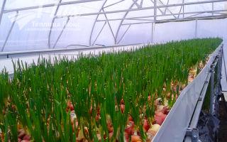 Что выгодно выращивать в теплицах: составление бизнес-плана, выбор овощей и оборудования – выращиваем в теплице