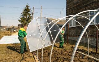 Установка теплицы на даче: выбор конструкции, этапы сборки, установка парника из поликарбоната, фото, видео – выращиваем в теплице