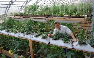 Теплицы для урала: критерии выбора, характеристика видов, советы, фото, видео – выращиваем в теплице